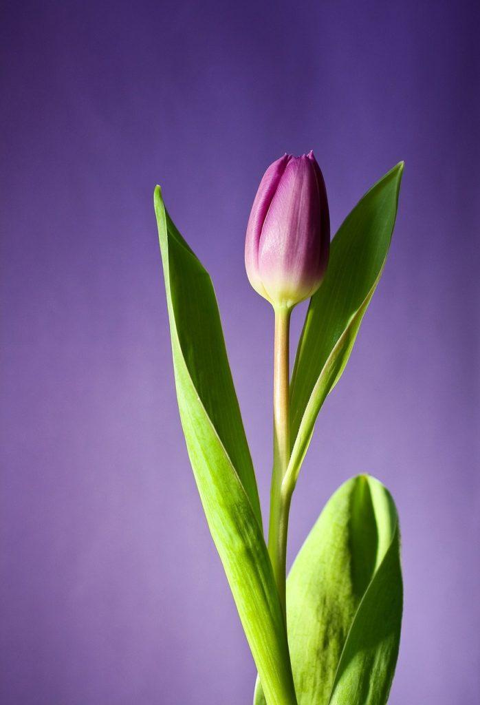 flower, bloom, spring