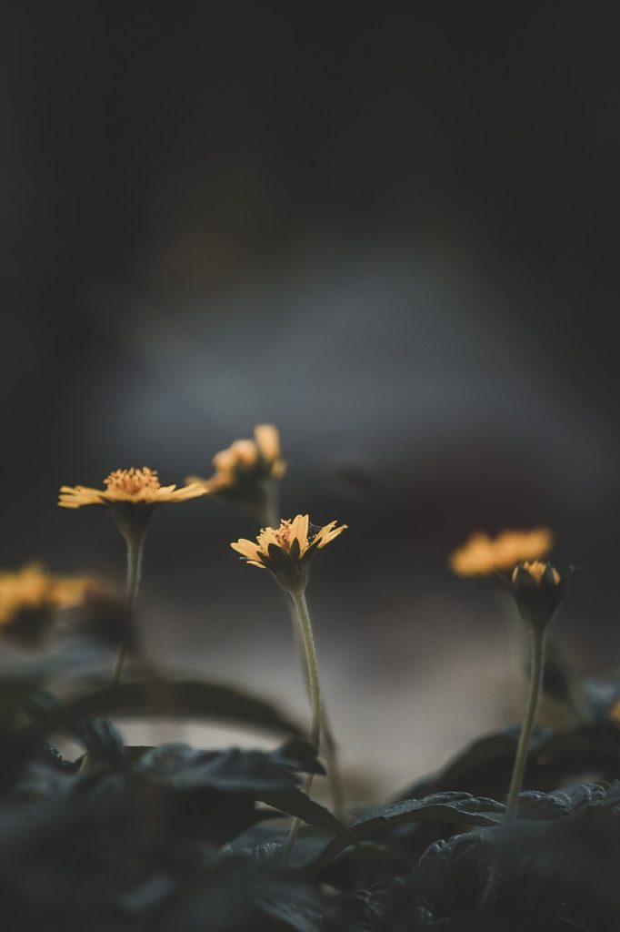 flower, nature, blossom