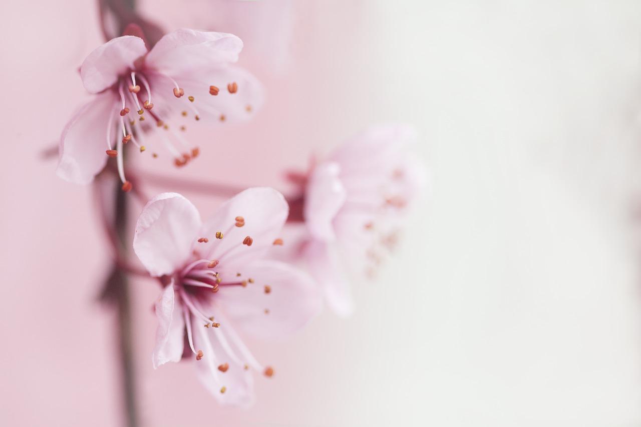 spring, blossom, flowers
