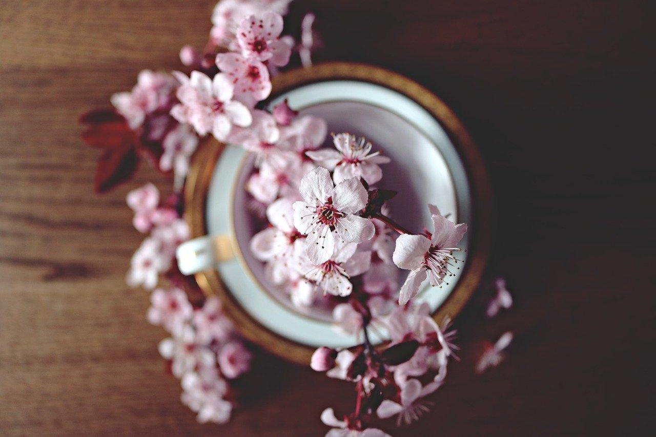 spring, cherry, bloom