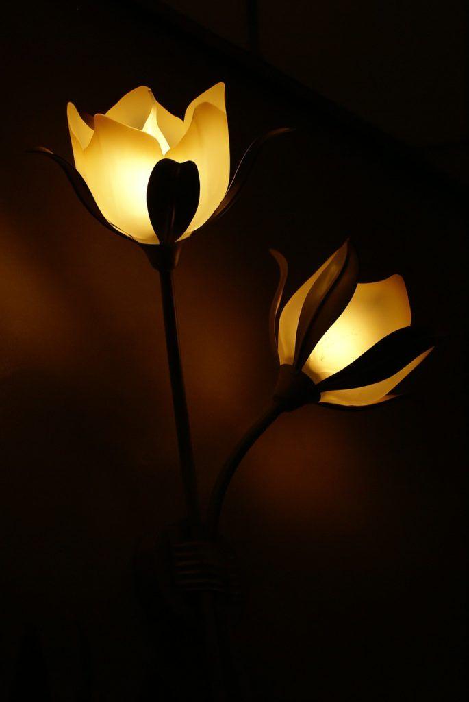 lamp, flower, light