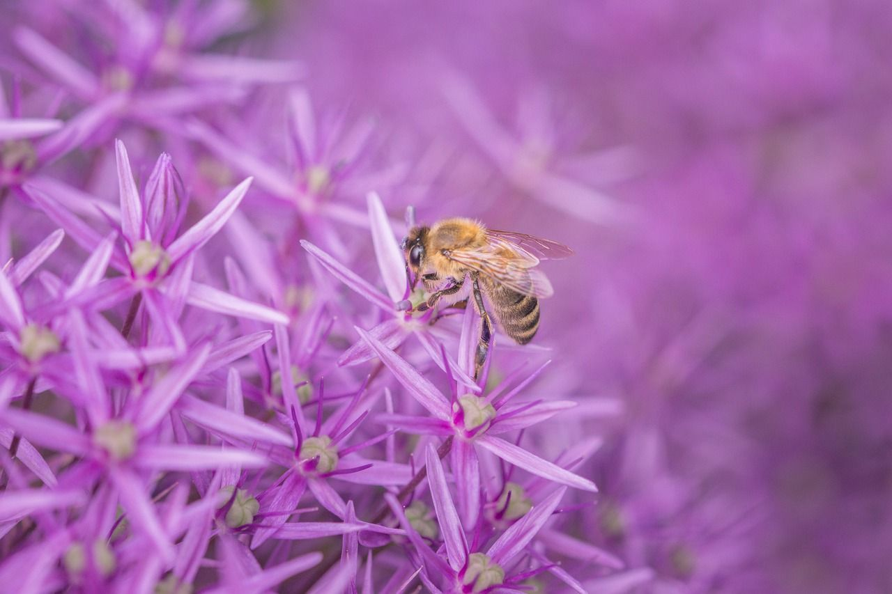 purple, pink, macro