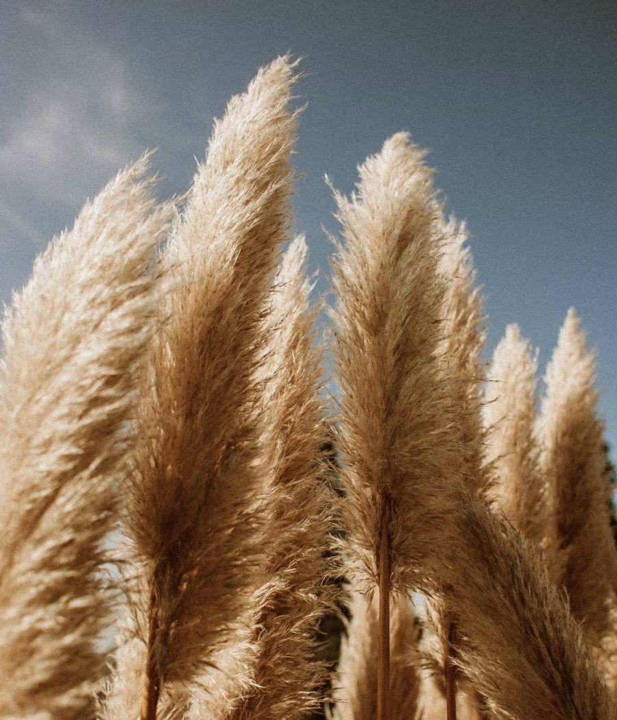 pexels-flora-westbrook-2302503