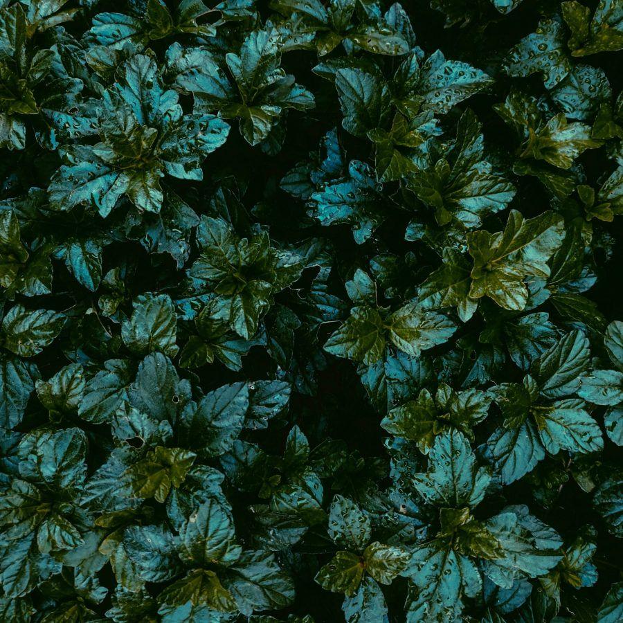 pexels-kiran-adithya-g-k-2971756